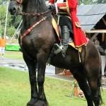 kavalerie 3
